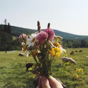 camp wildflowers sheep