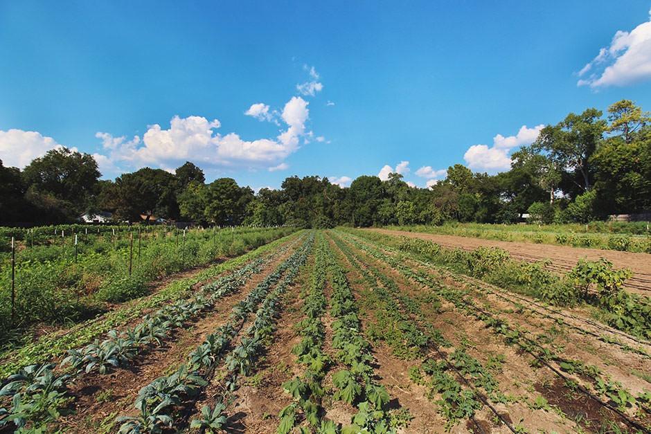 austin boggy creek farm field