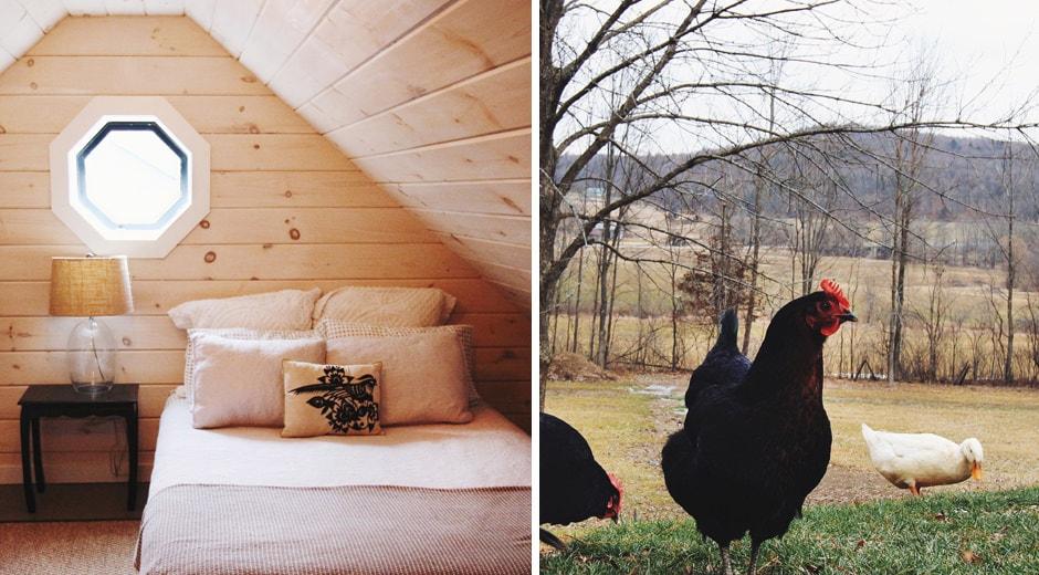 chickens bedroom split
