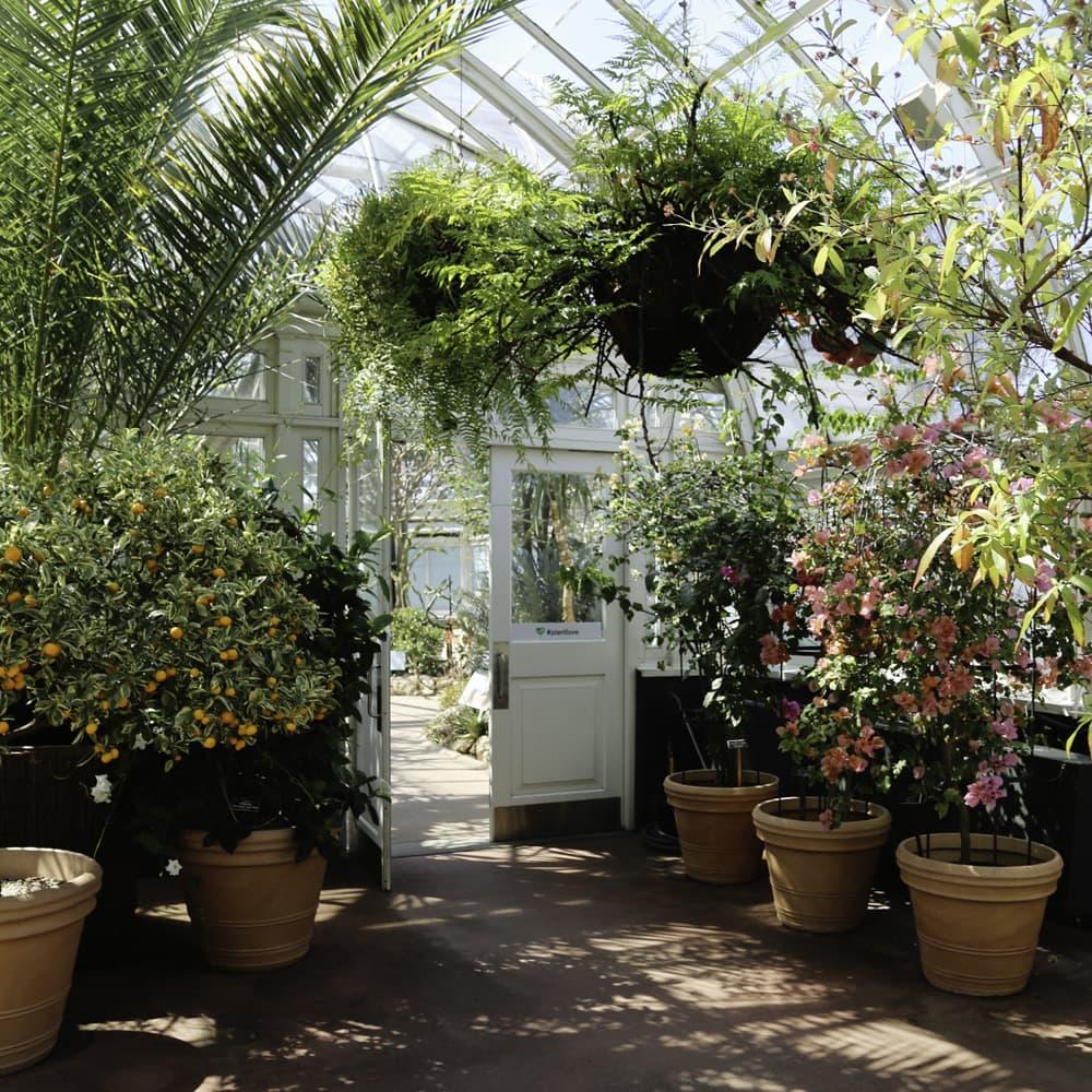 New york botanical garden in bronx ny escape brooklyn - Restaurants near bronx botanical garden ...